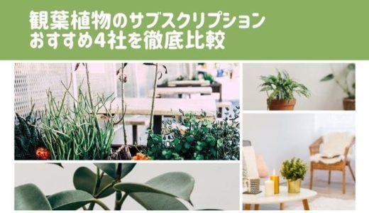 観葉植物サブスクリプションおすすめ4社を徹底比較!安いのは?