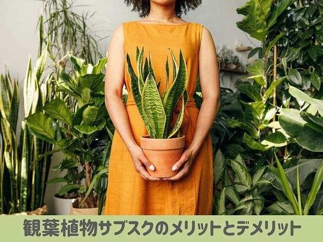 観葉植物サブスクメリットデメリット
