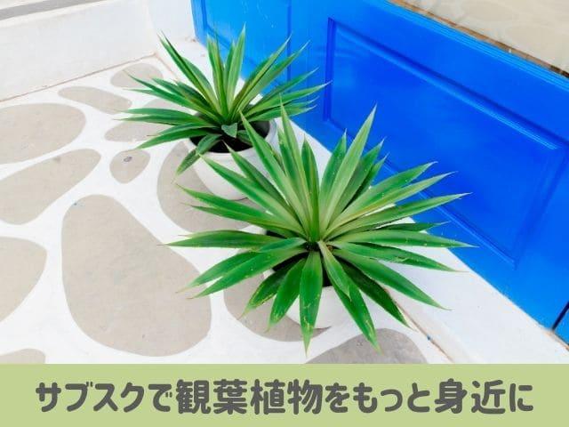 観葉植物サブスク